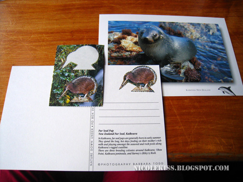 kaikoura postcards