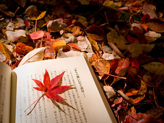 for your bookmarker (Sinnyodou temple, Kyoto) (Marser) Tags: autumn japan temple kyoto raw autumnleaves  lightroom grd  grd3 grdigital3
