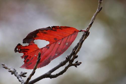 風のなかの枯葉
