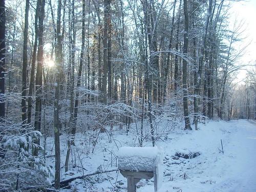 Snowy Sunday 4