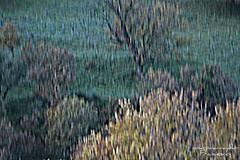 Impressionism pictures (yokopakumayoko) Tags: sardegna colori dicembre nuoro thesuperbmasterpiece theoriginalgoldseal cartaloi