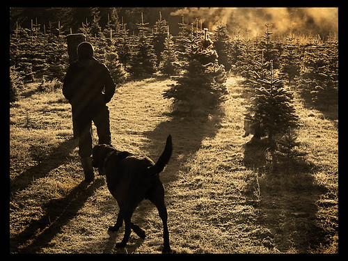 Frosty Morning, Christmas Tree Farm