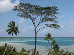 Large tree towering above the lagoon (Dennisworld) Tags: vacation tree biking frenchpolynesia maupiti