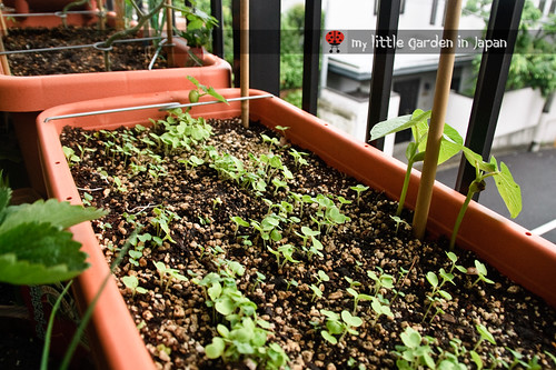 seedlings-and-sproutings-4