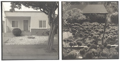 Shrub Diptych Nº 3 (efo) Tags: bw topiary elcerrito shrubs altprocess palladiotype efo:site=3
