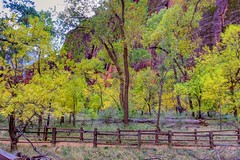 Happy Fence Friday (Herculeus.) Tags: 2016 bouldersstonerocks cliffs country diciduoustrees erosion fall fences landscape oct outdoor outdoors outside pathwaystrails trees ut zionnp tree