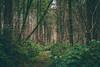 Enchanted Path (Chloé +++) Tags: enchanted enchanté path chemin forest forêt green vert verte arbres trees tree arbre feuilles terre leaf leaves lianes liana magic magique elves farytale fairies nièvre bourgogne france canon eos400d 50mm profondeur de champs field