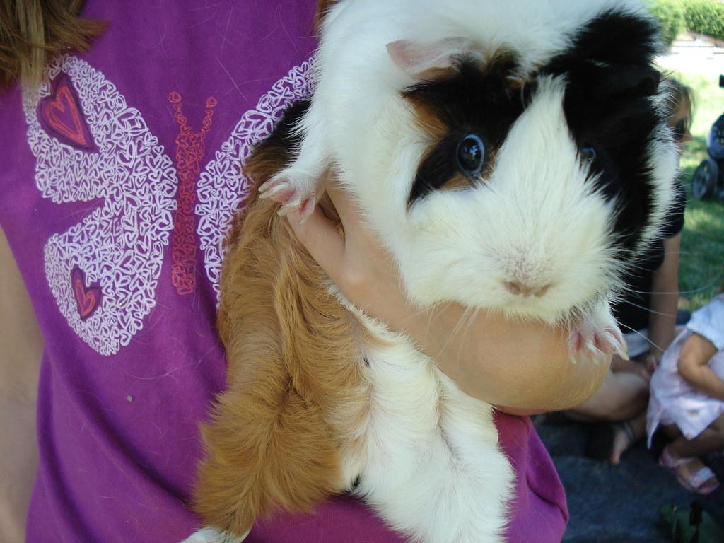 guinea...