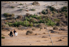Novios Cabo de Gata (scarabaeus sacer) Tags: 9 verano 2009 almería cabodegata cabodegatanijar nikond300 jatm64
