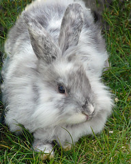 Pet Me (njchow82) Tags: pet canada cute bunny calgary animal adorable alberta 2009 calgarystampede exclusivity beautifulexpression anawesomeshot worldofanimals dmcfz18 njchow82 thecelebrationoflife citadelstampedebreakfast