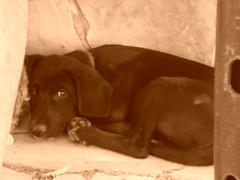 entotsolat (Joan Pau Inarejos) Tags: tristeza perros soledad solitario