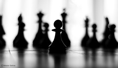 chess (nestor galina) Tags: bw dof chess hero winner 50mmf18d soe pawn ajedrez xadrez schaken scacchi schach peon  d80 3waychallenge  abigfave nikond80 ah platinumphoto anawesomeshot aplusphoto ltytr1   a3b   goldstaraward nikkornikonaf50mmf18d grouptripod  herowinner