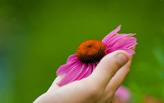 Flower (Juan Xavier) Tags: flower nature up close center greenburgh