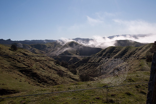 Spider web - Highway 4, NZ