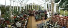Greenhouse (cork3000) Tags: cacti succulent aloe greenhouse agave opuntia pachypodium sedum arid echeveria graptopetalum mammilaria attenuata pachyphytum