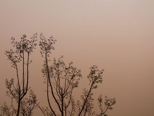 Dust storm deux by Handles.