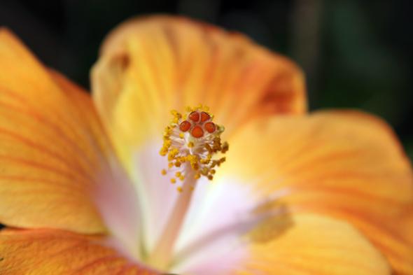 092609_flower_04