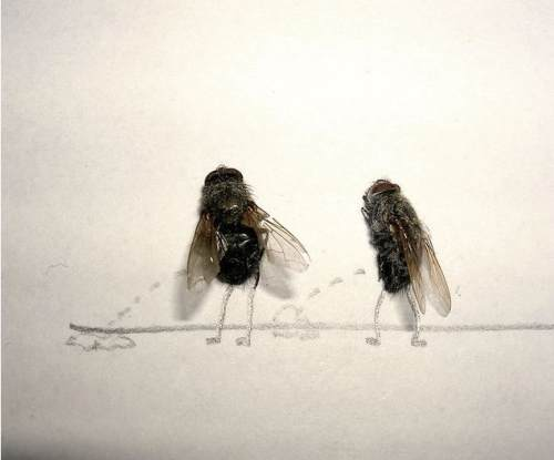 dead-flies-art-1
