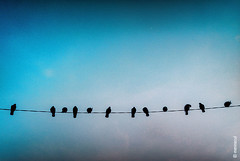 Vision One (mariarapaz) Tags: city cute nature birds bluesky minimalist
