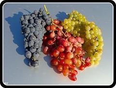 Uvas de Águas Frias (Chaves) (Mário Silva) Tags: portugal chaves aldeia trásosmontes uvas vindimas ilustrarportugal sérieouro águasfrias
