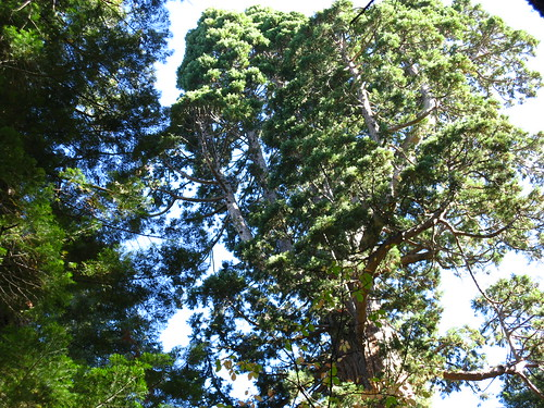 Calaveras Big Trees SP