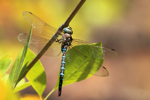 101609_dragonfly