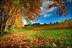Trisaetum Vineyards, Yamhill, Oregon (CarloPDX) Tags: nikon barrels winery crush d300 peterbouman carlopdx mikeschoenholtz trisaedum