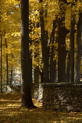 (hoppinjohn) Tags: fall wall stormking andygoldsworthy landscapeart