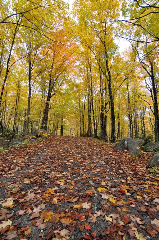 fallen_leaves_0221