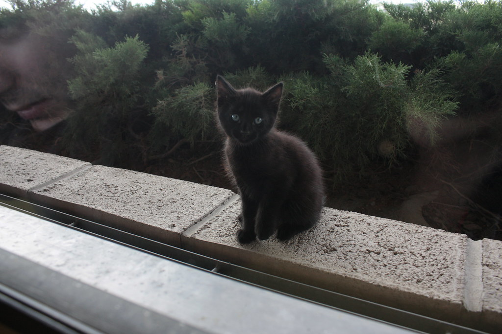 kitten outside restaurant