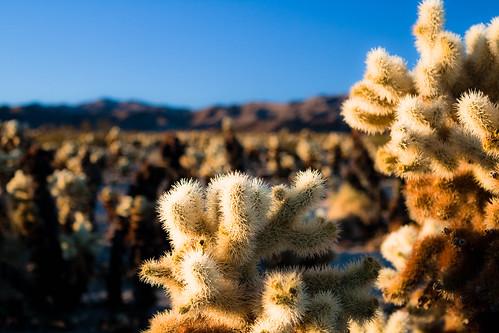 Chullo Cactus Garden