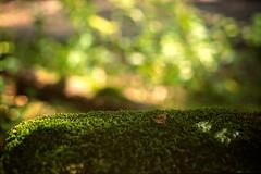 Green is the colour (melquiades1898) Tags: green analog germany hessen bokeh dia analogue ricoh darmstadt moos kleinbild grün farbfilm ricohkr10m perutzcr100