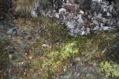 ingvellir (Milk and Cheese) Tags: nature landscape iceland nikon ingvellir goldencircle ingvellirnationalpark d5000 nikond5000