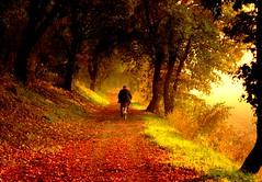 c' sempre un Autunno da percorrere. (occhi di lisa) Tags: old autumn man foglie strada nikond70 campagna giallo luce bosco bicicletta annalisa occhidilisa
