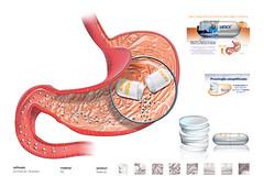 intestino (eduardowestin) Tags: ao anatomy studie anatomia capsula sistema estomago metodo digestivo comprimido