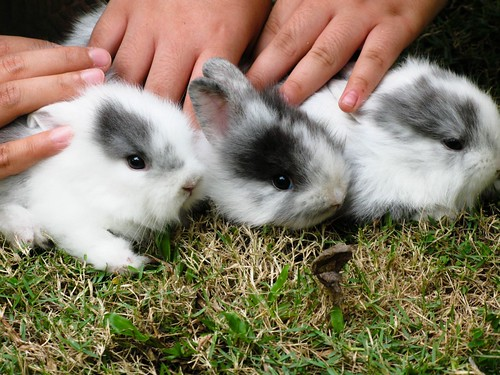 Bunnies Day Out