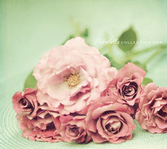 Sterling Roses (Shana Rae {Florabella Collection}) Tags: flowers roses texture vintage nikon purple 85mm naturallight explore bouquet sterling frontpage bluebackground d700 shanarae florabellatextures florabellavintageactioncomingsoon