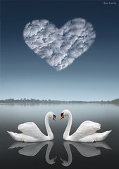 Together (Ben Heine) Tags: wedding wild wallpaper cloud mist lake bird art love misty swim photomanipulation river print poster freedom nager swan couple poem peace heart cloudy duo horizon creative foggy lac coeur melody digitalpainting creation together amour future forever mariage float nuage copyrights eternity sweetness ensemble tender cygne 4ever liefde tenderness peer tendresse brume eternal toujours idem waterscape saintvalentin sache paire pome milosc saintvalentinesday wesela benheine infotheartisterycom