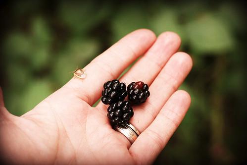 berriesandbug_ed