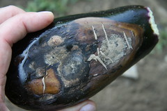 blighted eggplant