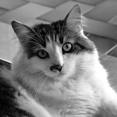 What do you want...Vet ?! (Gaia83) Tags: veterinarifotografi