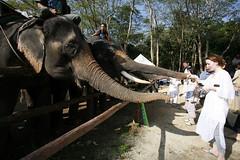 Chang(e) Caravan Day 2: Set Off เดินกับช้างวันที่ 2: เริ่มออกเดินทาง