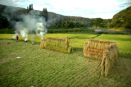 Drying Rice and Burning Weeds