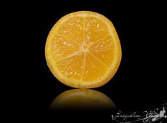 Rangpur lime | Limão rosa (Jack Venancio) Tags: macro photoshop lemon limão rangpurlime limãorosa sonycybershotw35 goldstaraward jackvenancio limãocavalo limãofrancês limãovinagre