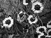 Lovely and Yellow - B&W (Reinalasol) Tags: flowers blackandwhite bw flores flower nature blackwhite petals flickr flor monotone april panama 2009 mbw mostlyblackandwhite petales april2009 mostlyblackwhite panama2009 reinalasol