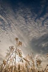 Amazing Sky - 3.... (Shad0w_0f_Dark) Tags: deleteme5 autumn sunset deleteme8 sky deleteme deleteme2 deleteme3 deleteme4 deleteme6 deleteme9 deleteme7 clouds evening deleteme10 sigma ttl dhaka 105 d200 dramaticsky bangladesh f28 macrolens autumnsky bashundhora kashful deama