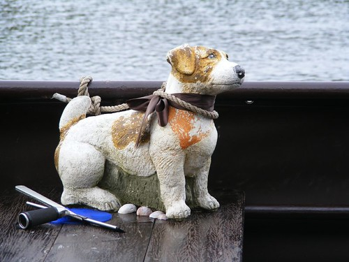Low Maintenance Boat Dog