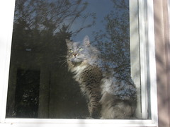 Harley In The Window 3
