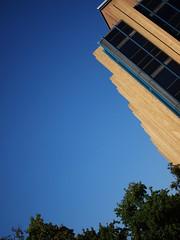 ~/ (amysh) Tags: sky tree philadelphia pennsylvania utata universityofpennsylvania lrsm olympuse420