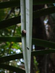 Coffee plantation, Zanzibar [zan09]